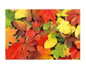 1_fl_255_005_colourful_leaves.jpg