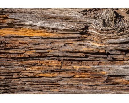 Fototapeta 2XL-541 Kôra stromu 400 x 267 cm Kliknutím zobrazíte detail  obrázku. 7465c4bd279