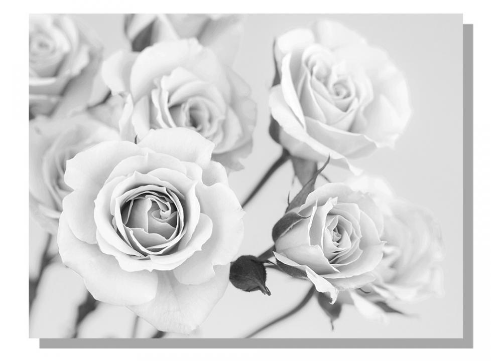 b88a60df3c7f Obrazy na plátne Dimex - Ruže čiernobiele 100 x 75 cm